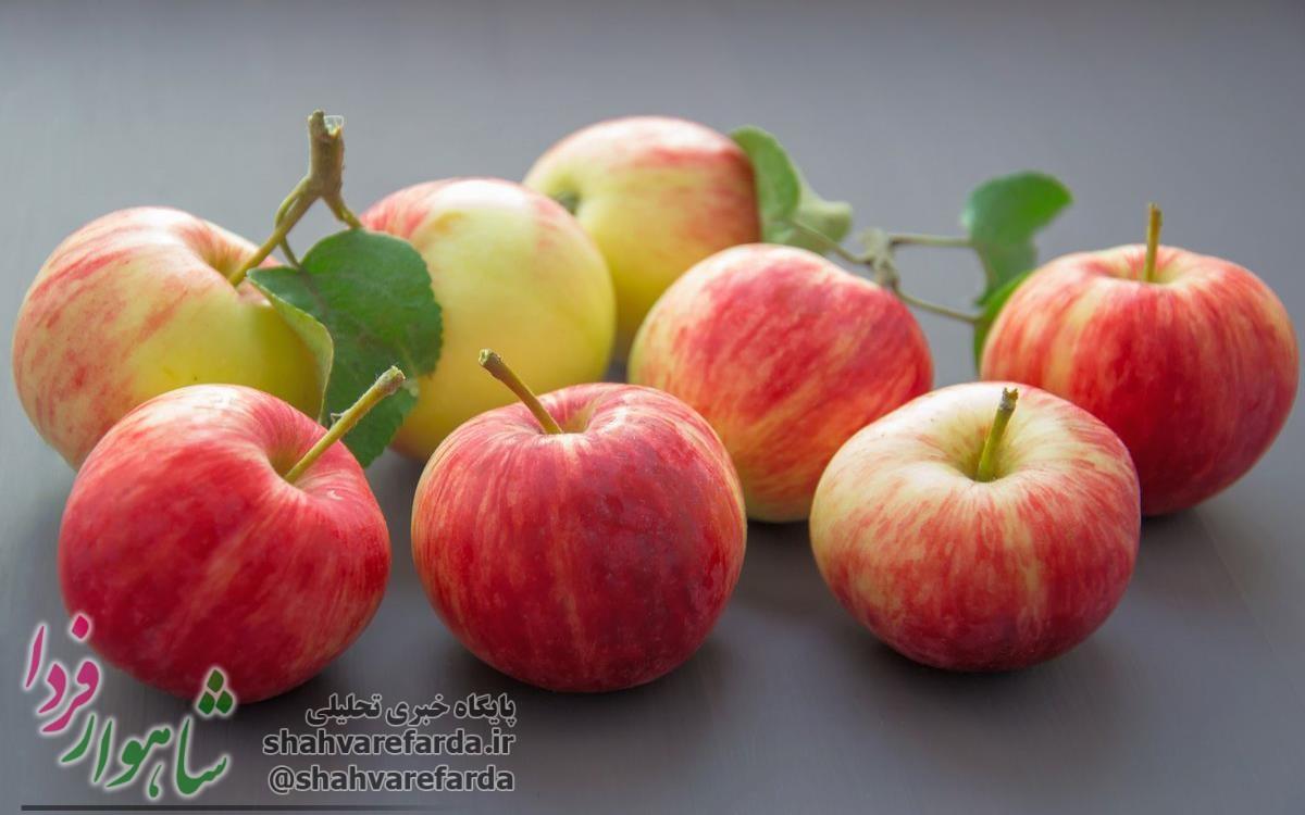 Photo of ۵۰ درصد باغ های سیب استان در شاهرود وجود دارد