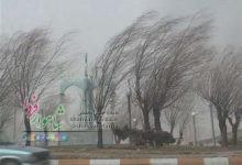 Photo of تند باد شاهرود را درنوردید / شکستن شاخه ها / شهرداری آماده باش است